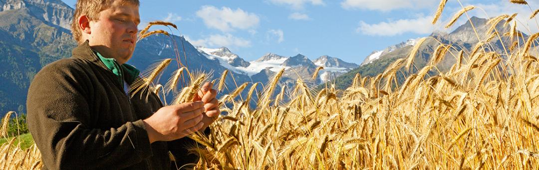 Brot und Getreide vom Bauern